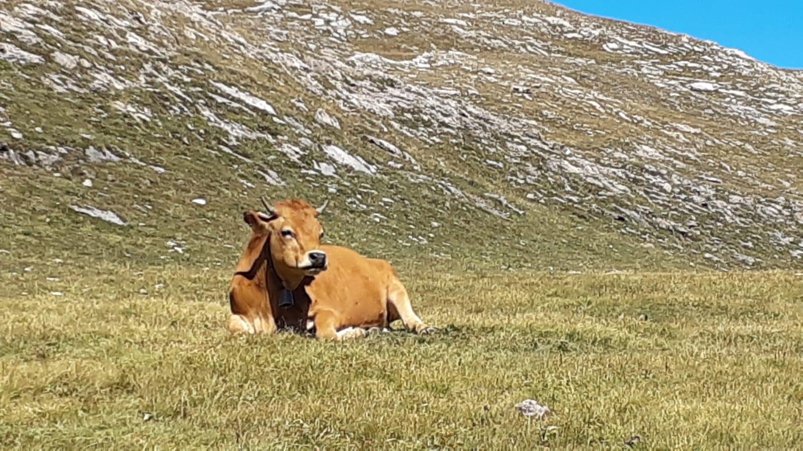 Quels impacts du Covid sur l'agriculture européenne et sur la PAC?