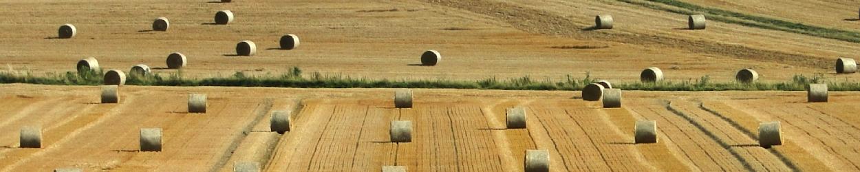 Comment assurer un bon prix pour les agriculteurs ?